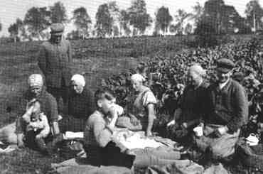 Feldvesper  1938